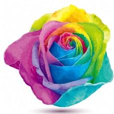彩虹色玫瑰花