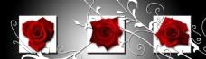 玫瑰花 时尚无框画 抽象
