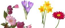 春天花朵素材