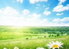 绿色草原树林风景