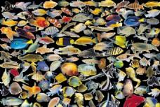 热带鱼PSD分层素材