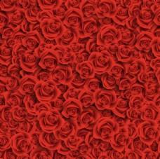 红色玫瑰花背景