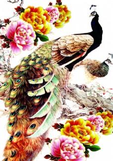 孔雀 高清图 水墨画
