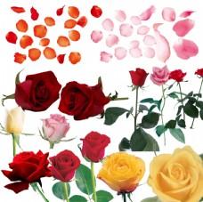 玫瑰花玫瑰花瓣