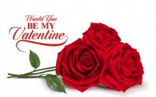 美丽红玫瑰贺卡矢量素材