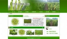 硕丰金银花有限公司网站