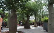 新加坡滨海植物园