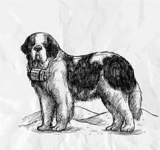 手绘圣伯纳犬矢量素材