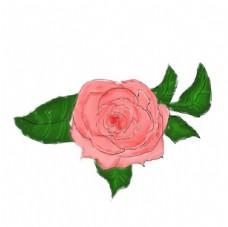 手绘粉色花