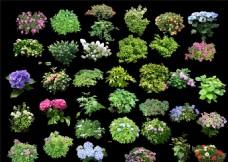 植物花卉分层素材