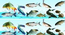 活鱼鲜鱼图