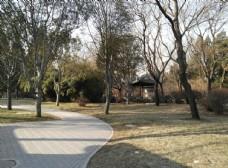 冬日園林景觀
